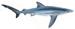 Blauwe Haai