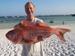 Deepwater red snapper